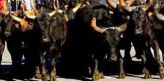 Święto San Fermin odbywa się w Pampelunie na północy Hiszpanii, gdzie trwa od 6 do 14 lipca.