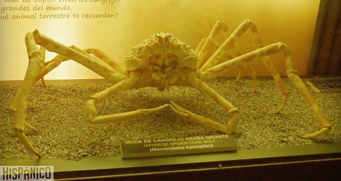 ciudad-de-las-artes-y-las-ciencias-oceanografico-cangrejo