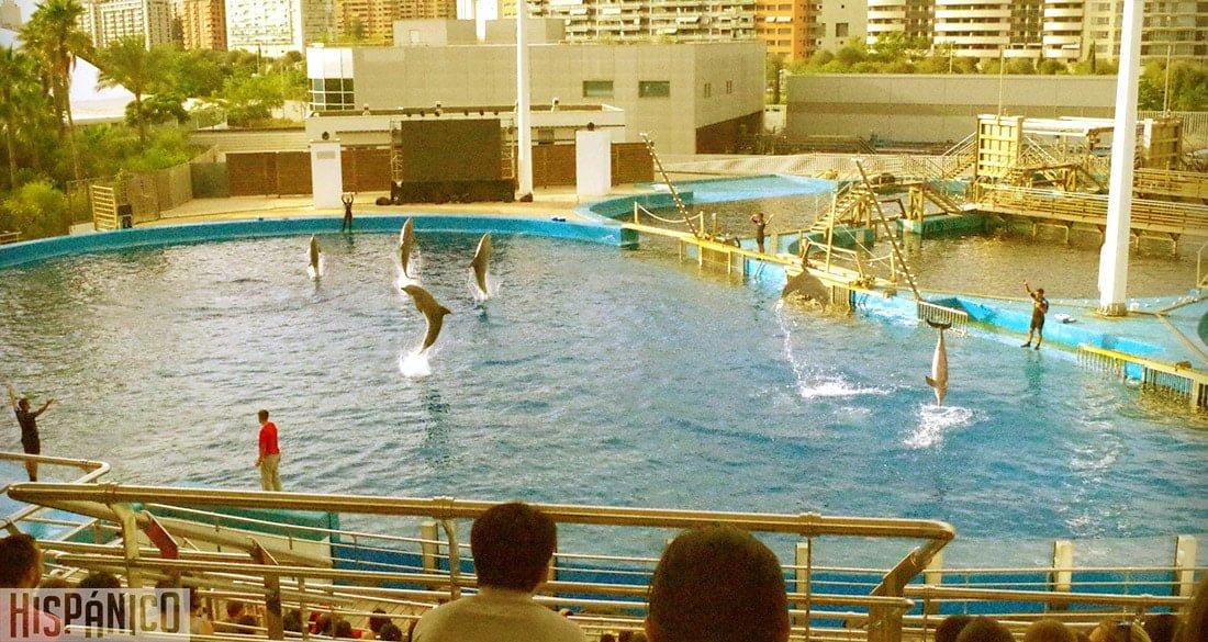ciudad-de-las-artes-y-las-ciencias-oceanografico-delfin