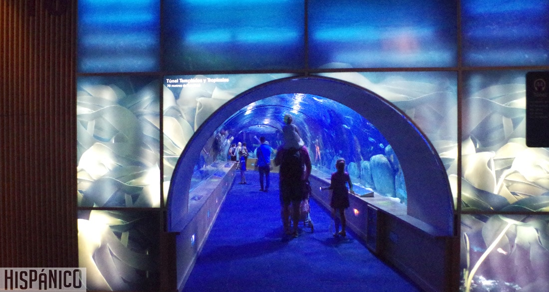 ciudad-de-las-artes-y-las-ciencias-oceanografico-tunel
