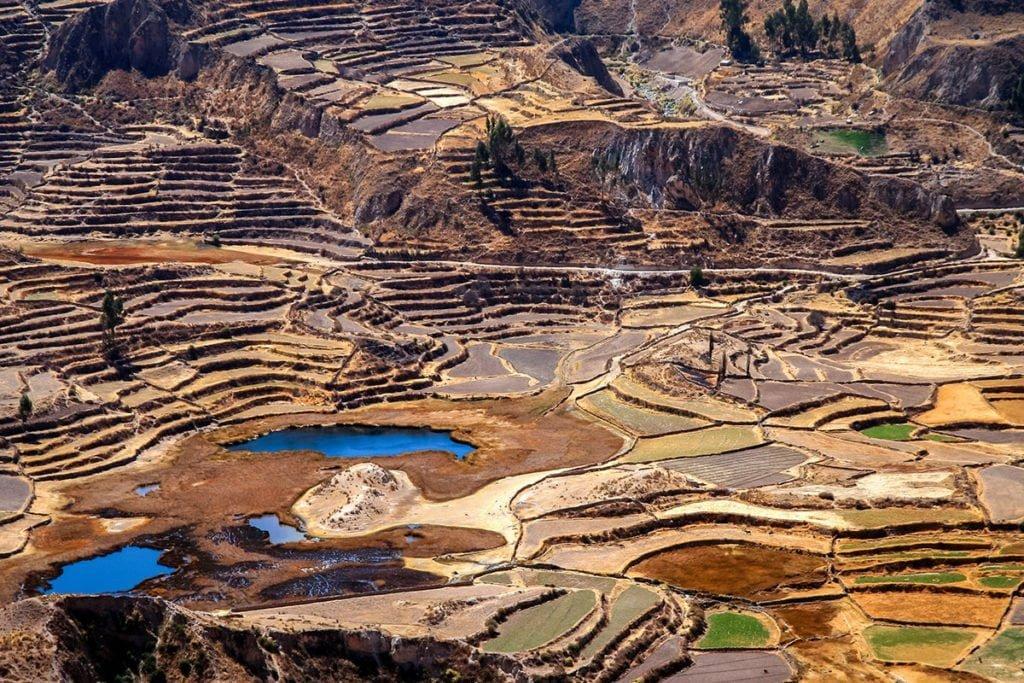 Peru Atrakcje: Tarasowe pola uprawne w kanionie Colca