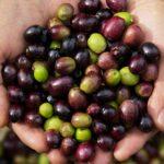 Jaén - światowa stolica oliwy z oliwek | Południowa Hiszpania (Andaluzja) // HIspanico.pl