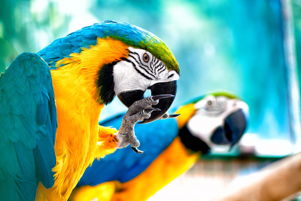 Usytuowany na Wyspach Kanaryjskich Loro Park był pierwszym parkiem w Europie, w którym zaczęto organizować pokazy papug.