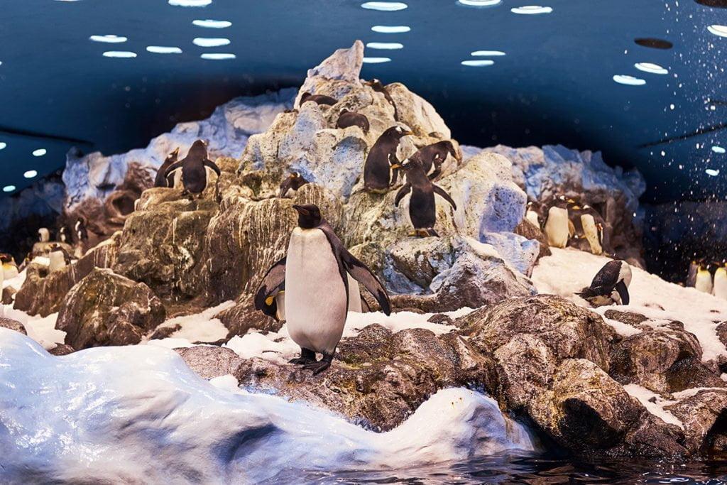 Pingwiny w Loro Park