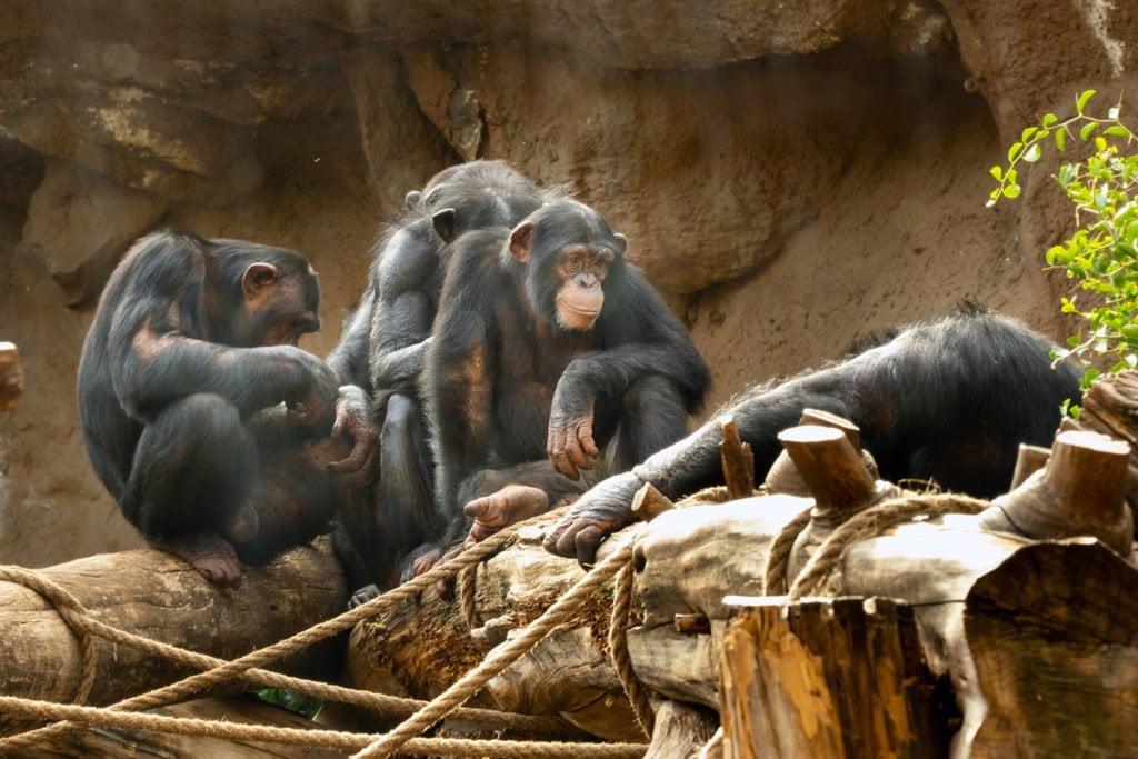 Loro Park (Loro Parque) to zdaniem wielu osób najpiękniejszy zoobotaniczny park na Teneryfie.
