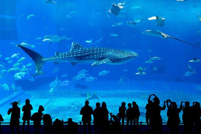 Palma Aquarium i najgłębsze rekinarium w Europie