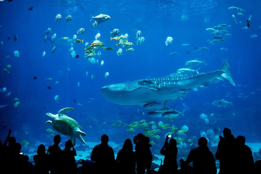 Palma Aquarium na Majorce i najgłębsze rekinarium w Europie