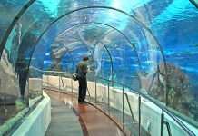 Podwodny tunel Oceanarium w Barcelonie (Costa Brava)