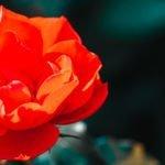 Królewski Ogród Botaniczny w Madrycie - Zwiedzanie i Informacje