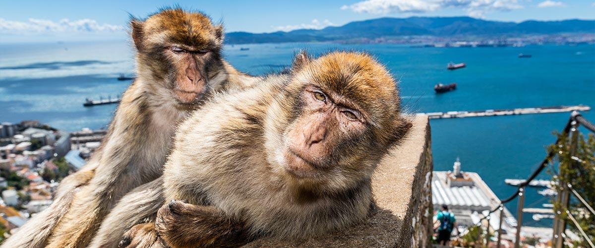 Gibraltar - Półwysep makaków na krańcu Europy