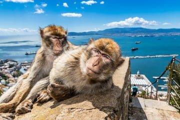 Mimo że niektóre makaki są bardzo przyjaźnie nastawione do ludzi, to warto pamiętać, że wciąż są to półdzikie zwierzęta