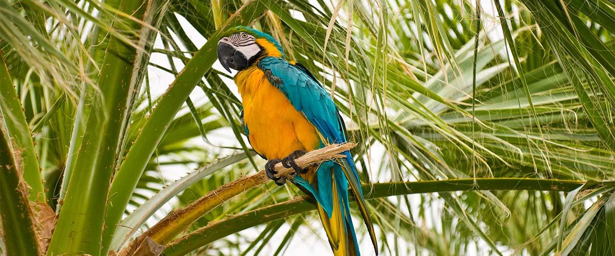Terra Natura Benidorm - Tematyczny ogród zoologiczny w Benidorm