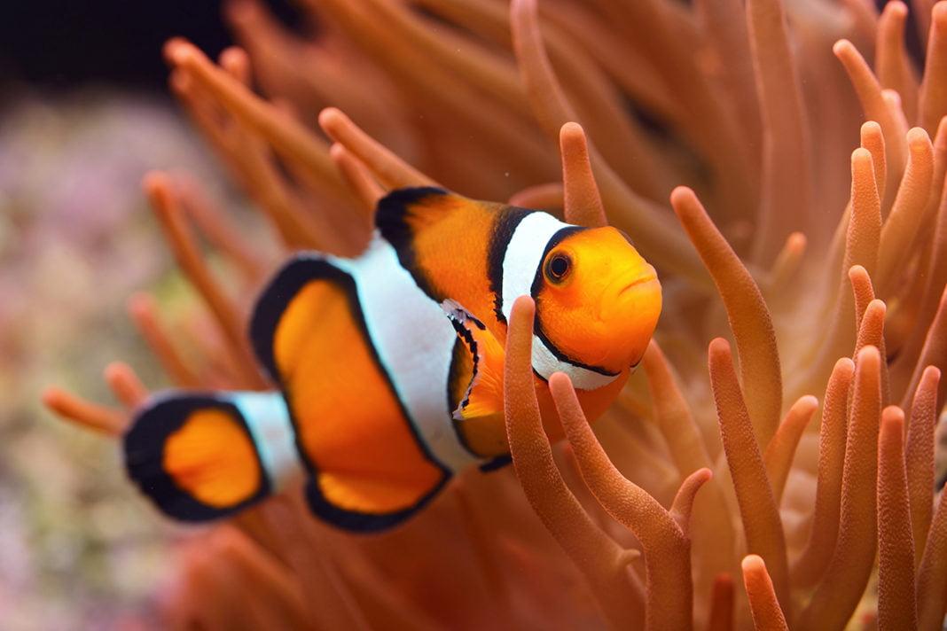 Aquarium Lanzarote - Tutaj mieszka rybka Nemo