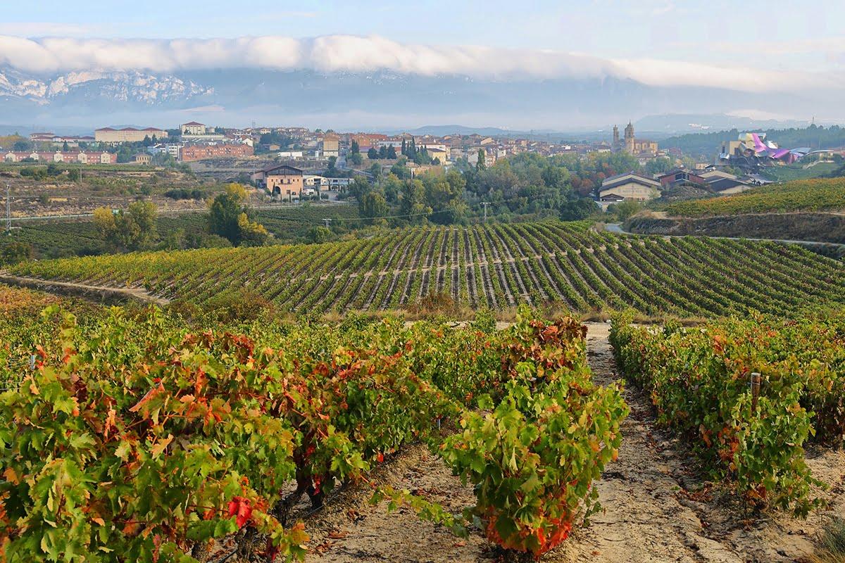 Uprawy winorośli w La Rioja